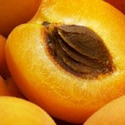 Huile huile de noyau d 39 abricot - Planter noyau d abricot ...